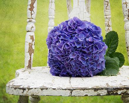 Hydrangea I by Mary Hershberger