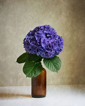 Hydrangea V by Mary Hershberger