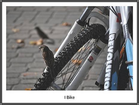 Daryl Macintyre - I Bike