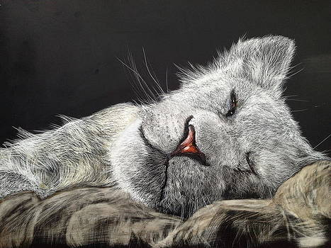 Old Lioness - dreaming of a feather bed by Jan Lowe