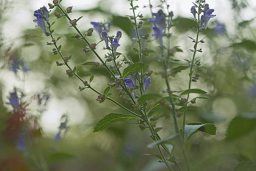 I Dreamed a Garden by Jane Eleanor Nicholas