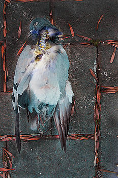 Icarus Mechanika by Blaise Pellegrin