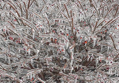 Barbara McMahon - Ice Abstract 1