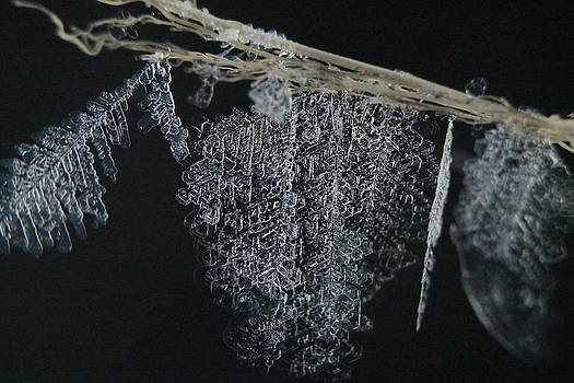 Ice Frozen in Time by Alicia Knust