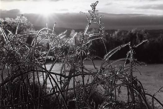 IceRise by DJ Florek