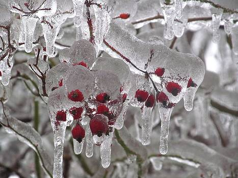 Alfred Ng - icicle berries