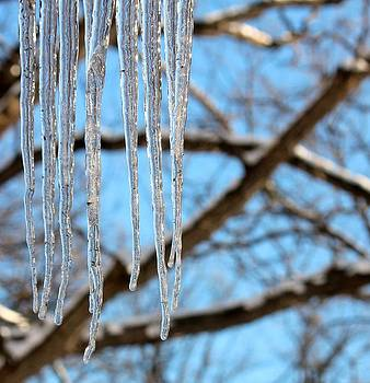 Rosanne Jordan - Icicles at Attention