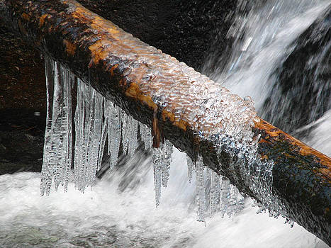Icicles hanging off branch over a creek 1 by Teresa Cox