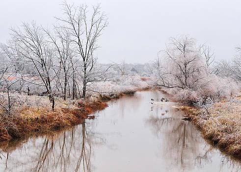 Icy Flight by Sarah Rodefeld