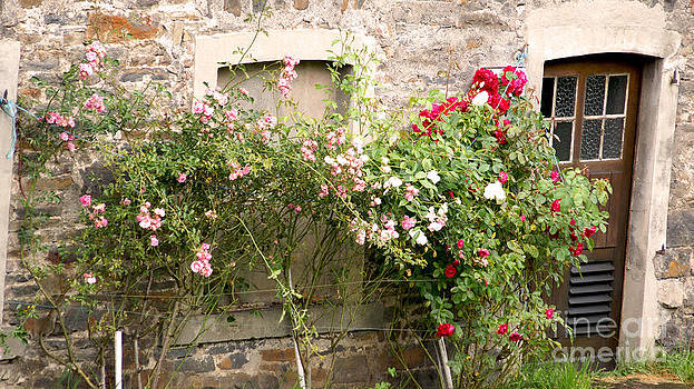 Idyllic with Roses by Eva-Maria Di Bella
