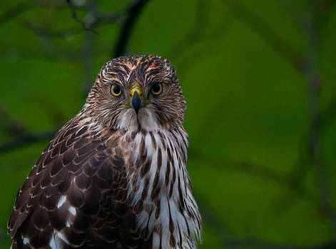 If Looks Could Kill by Dave Weth