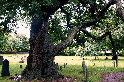 If this tree could talk by Bess Yearsley