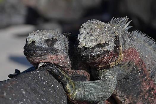 Iguana's Embrace by Jennifer Kelly