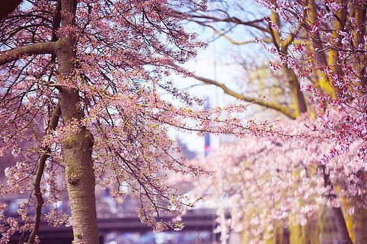 Jenny Rainbow - Illuminated Trees. Pink Spring in Amsterdam