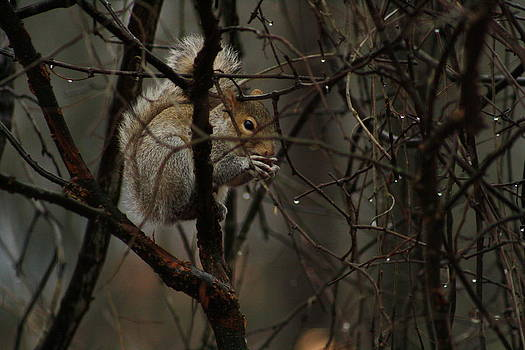 I'm Just a Squirrel by Jim Johnson