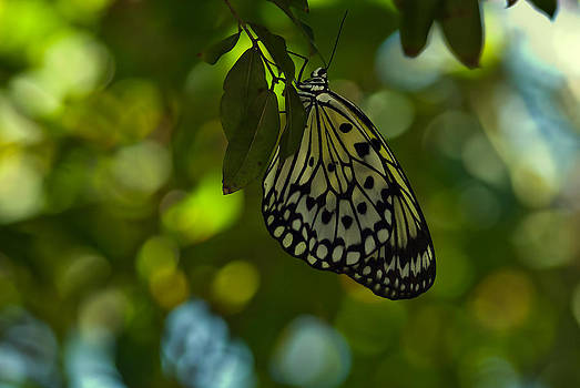 Imagine a world without butterfies by Michael Rucci