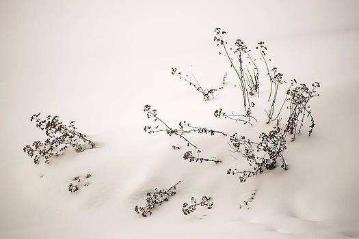 In a Snow Drift by Robert Mitchell