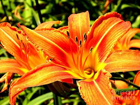 In Bloom 2 by Chad Thompson