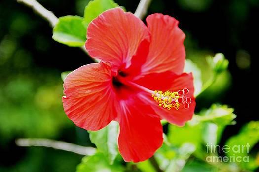 In Bloom by Jeff Sommerfield