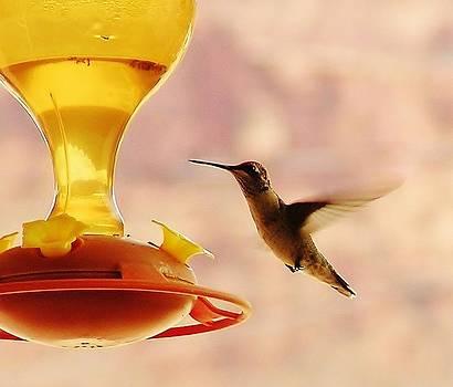 In Flight  by Aliesha Fisher