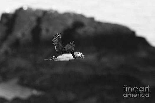 In Flight by Anne Gilbert