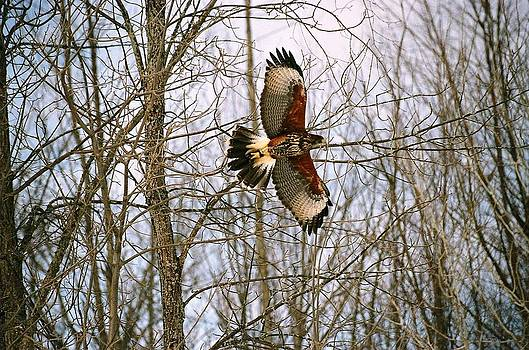 In Flight by David Porteus