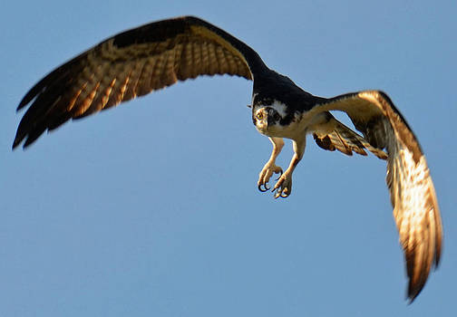 In Flight by Julie Cameron
