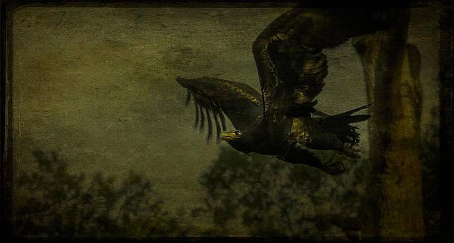 In-Flight by Shari Mattox