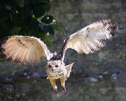 In Flight by Sheila Wedegis