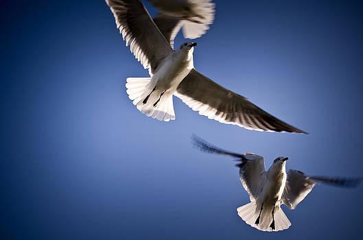 In Flight by Swift Family