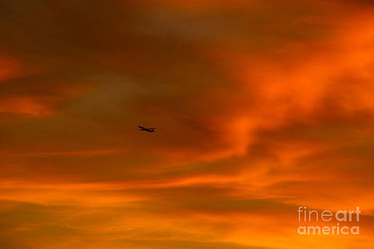 In Flight Through Amber and Orange by Nicholas Tancredi