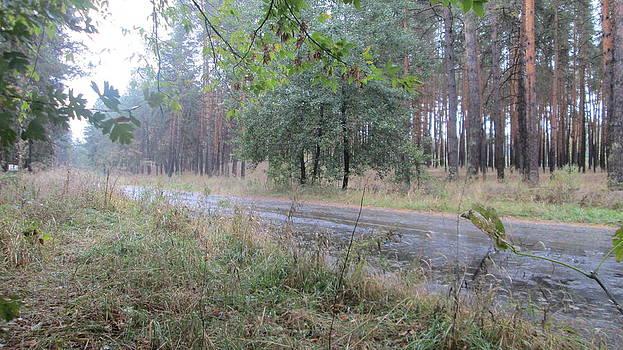 In forest by Sergiy Skorin