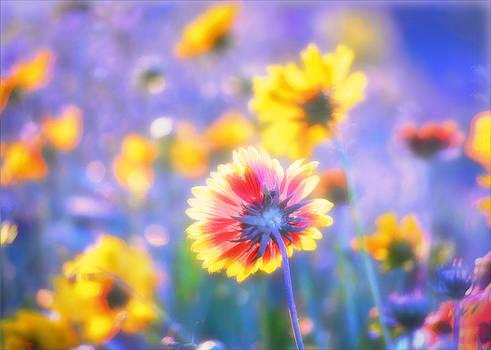 In summer the song sings itself by Douglas MooreZart