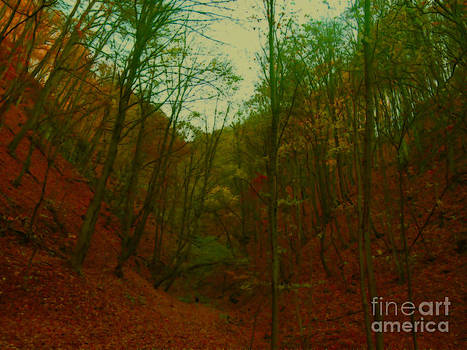 in the Hungarian woods by Zsuzsa Lado