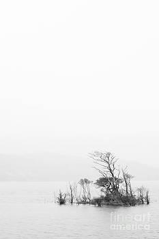 In the mist by Maciej Markiewicz