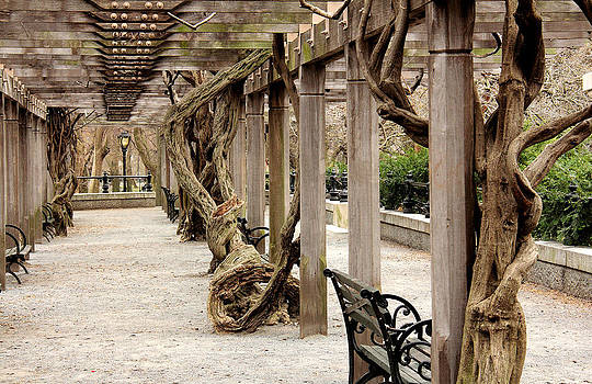 In The Park  by Mark Ashkenazi