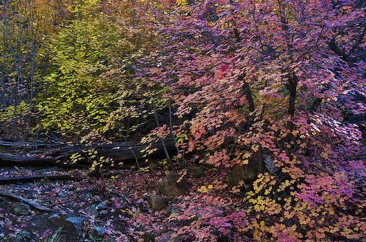 Saija  Lehtonen - In The Pink Forest
