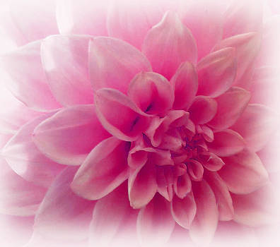 In The Pink Of My Life by Faye Giblin