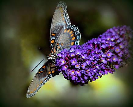 Rosanne Jordan - In the Spotlight Butterfly