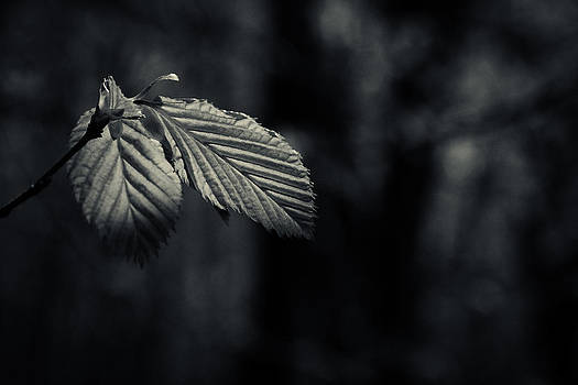 In The Spotlight - Black And White Version by Andreas Levi