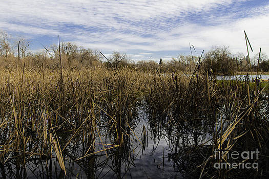 In The Weeds by David Taylor