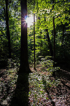 In the Woods by Dheeraj B