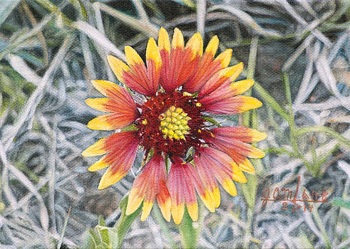 Indian Blanket by Joshua Martin