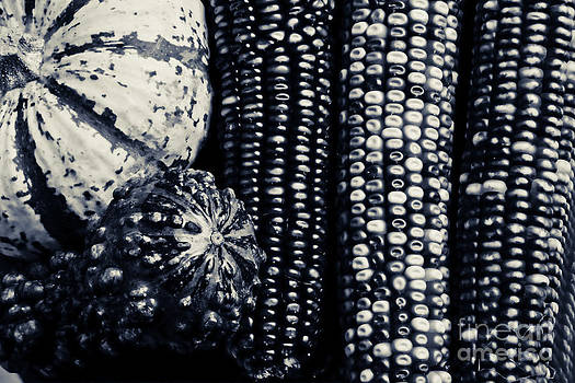 James BO  Insogna - Indian Corn and Squash in Black and White
