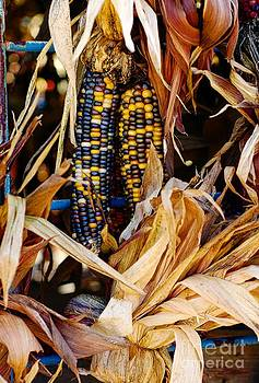 Indian Corn by Kathleen Struckle
