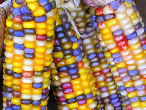 Indian Corn by Suzanne DeGeorge