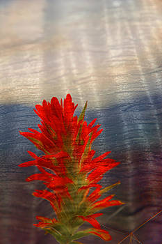 Randall Branham - Indian Paint Brush painted on wood