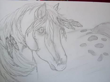 Indian Pony by Rosalie Klidies