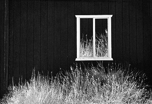 Infrared Barn by Sharon Beth