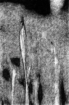 Ink Iris by Yevgeni Kacnelson